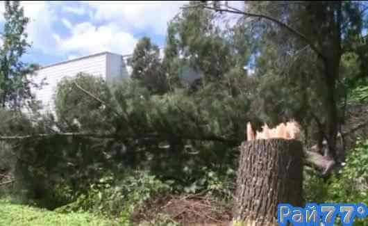 Американец неудачно освободил место под стоянку автомобиля и разрушил своё жилище, срубив дерево на участке у соседа (Видео)