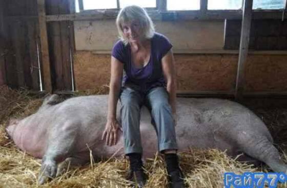 Секс хозяйки с свиньей видео