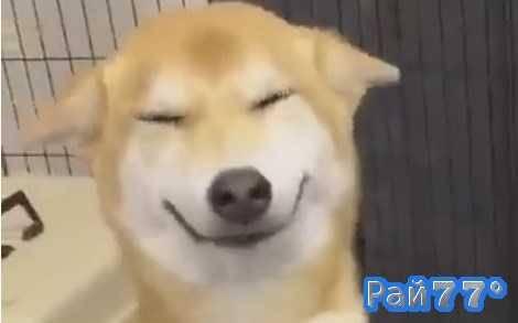 Улыбающийся пёс-барбос покорил интернет