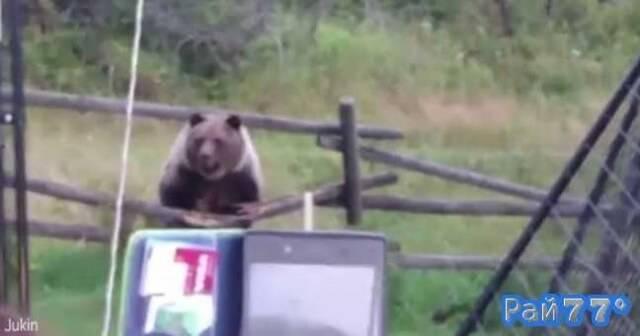 Медведи наведались в частное жилище в Канаде