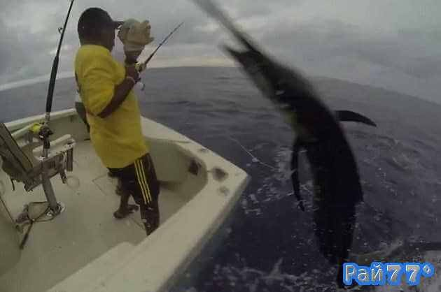 как весло помогает рыбаку
