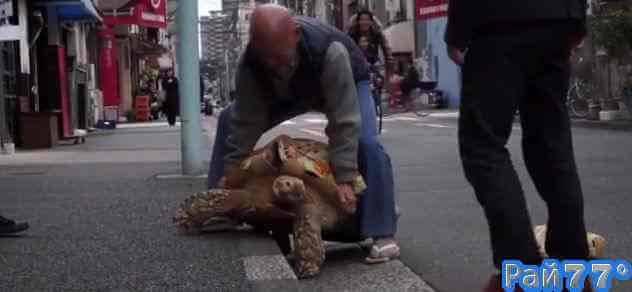 Японец гуляет с гигантской черепахой по улицам Токио