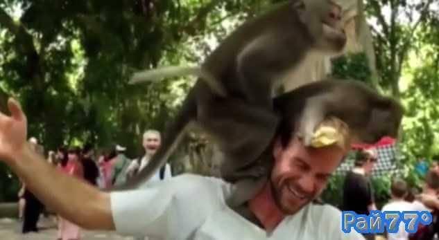 Обезьяны порезвились на голове у туриста в Индонезии