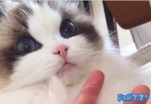 Кот Могги испытал шок после облизывания пальцев своего хозяина