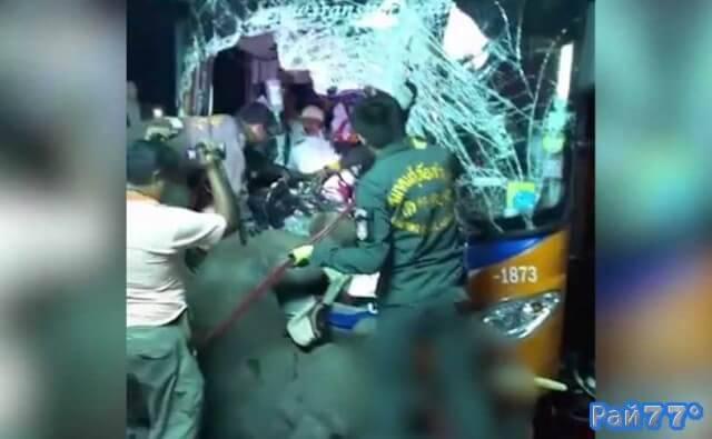 ДТП с участием слона и двухэтажного автобуса произошло в Тайланде