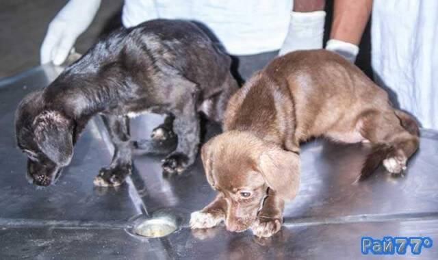 Щенки чудом выжили, оставшись без еды и воды 25 дней