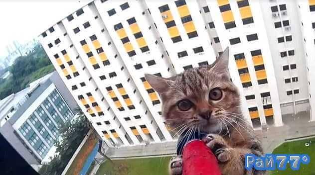 Операция по спасению котёнка застрявшего на выступе дома в Сигапуре