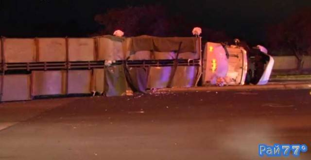 Двести индеек оказались на австралийской магистрали в результате ДТП