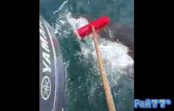 Австралийский рыбак шваброй отогнал акулу от своей лодки