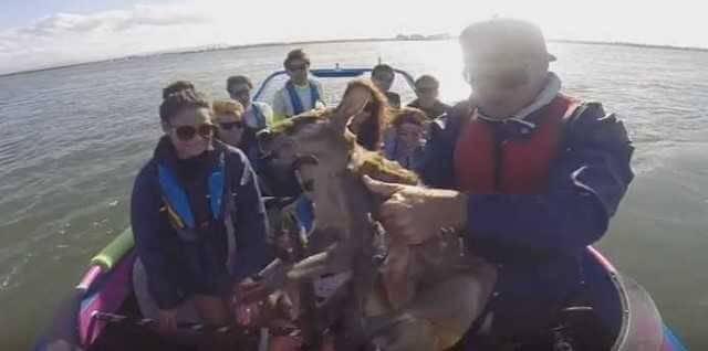 Туристический гид спас кенгурёнка заплывшего далеко от берега