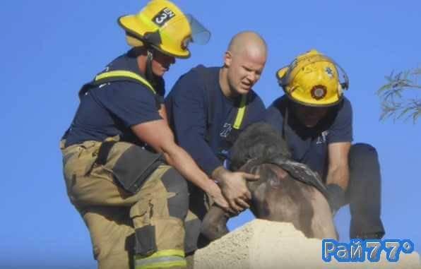 Американцу, застрявшему в дымоходе собственного дома потребовалась помощь спасателей