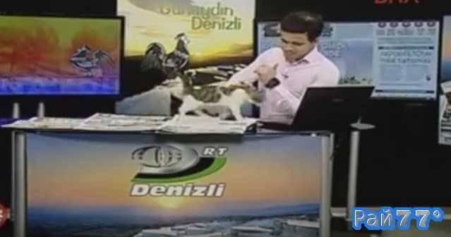 Котёнок украсил прямой эфир выпуска новостей в Турции