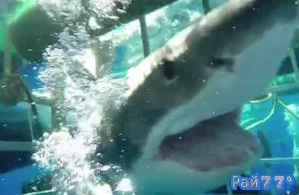 Акула во второй раз атаковала дайвера недалеко от острова Гуадалупе