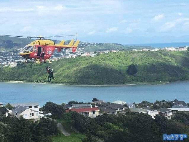 Новозеландского кота снимали с дерева при помощи вертолёта
