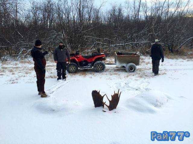 Два лося вмёрзли в лёд на Аляске