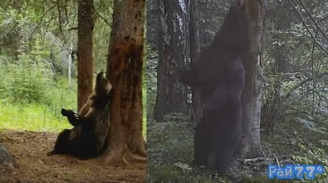 Медведь станцевал тверк в горах Канады