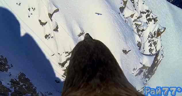 Орёл с видеокамерой пролетел над Альпами