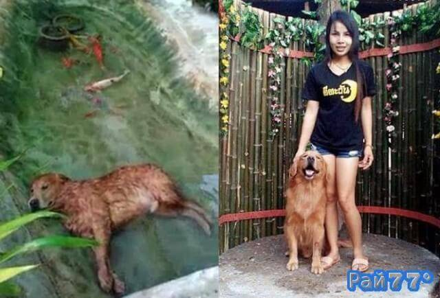 Собака уснула в пруду с рыбками, в Тайланде