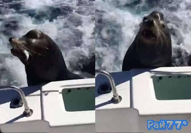 Наглый морской лев запрыгнул в лодку к рыбакам у побережья Калифорнии. (Видео)