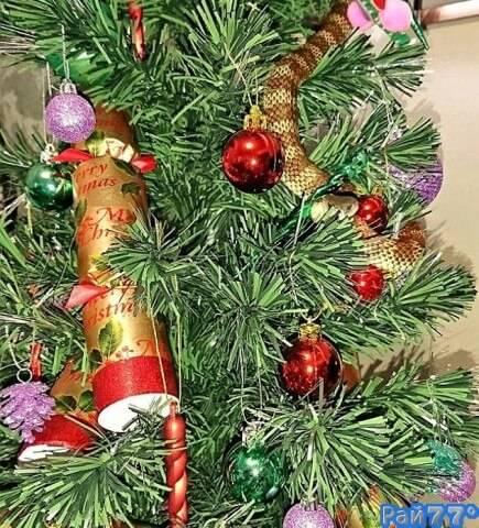 ЭАвстралийка, вернувшись домой обнаружила новое, ядовитое украшение новогодней ёлки.