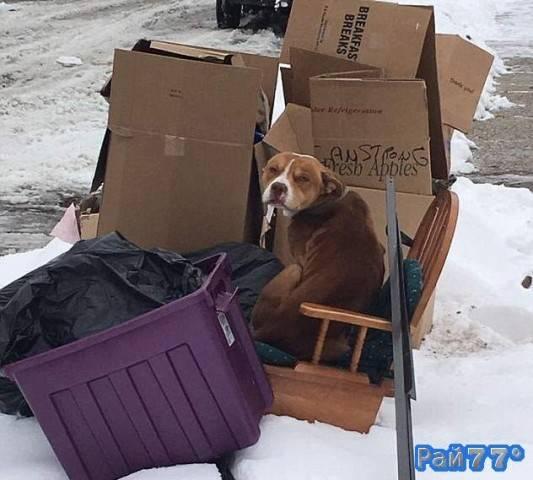 Собака целую неделю без еды провела на морозе, дожидаясь бросивших её хозяев.