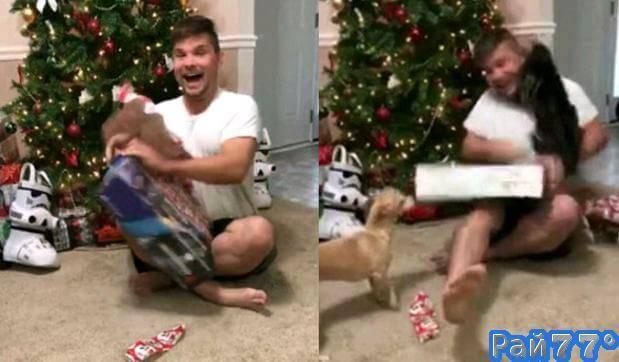 Кошка успокоила перевозбуждённого хозяина, получившего подарок на Рождество. (Видео)