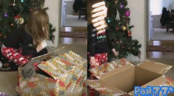 Маленький котёнок, слишком быстро выпрыгнувший из подарочной коробки, лишил сюрприза юную американку. (Видео)