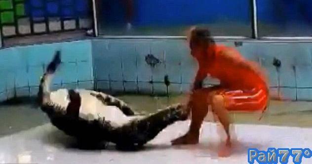 Дрессировщик крокодилов чудом сохранил свою руку после неудачного шоу для привлечения туристов в Тайланде. (Видео)