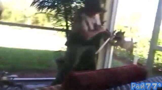 Бешеная рысь устроила драку со спасателем в частном доме, во Флориде. (Видео)