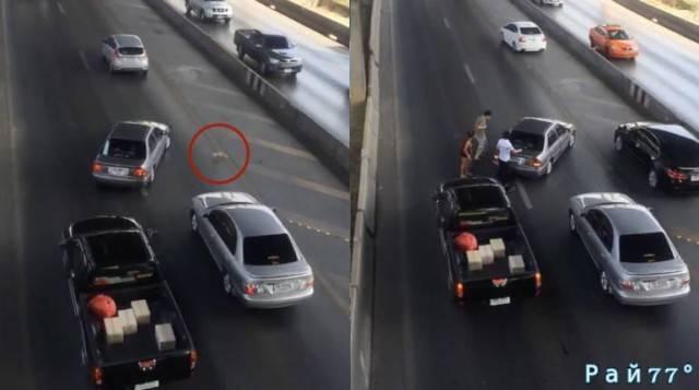 Спасение котёнка на оживлённой магистрали снял случайный свидетель инцидента