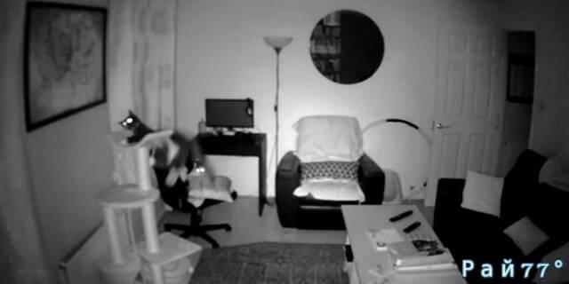 Толстый кот сломал многоуровневый, игровой комплекс в шотландской квартире. (Видео)