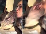 Свирепый пёс решительно предостерёг от поцелуев юную хозяйку
