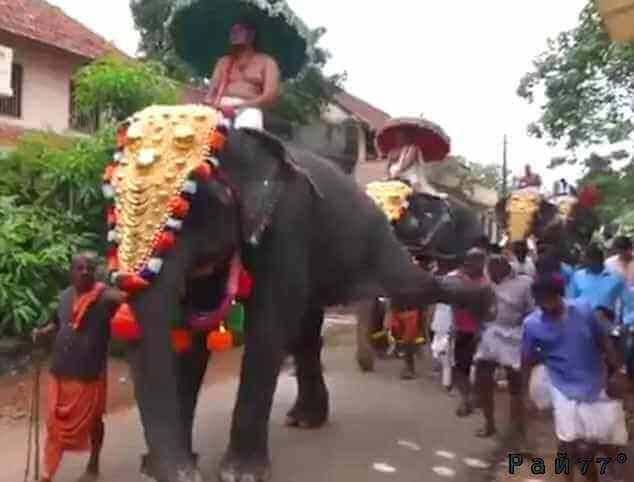 Слон послал в глубокий нокаут индийца во время священной церемонии