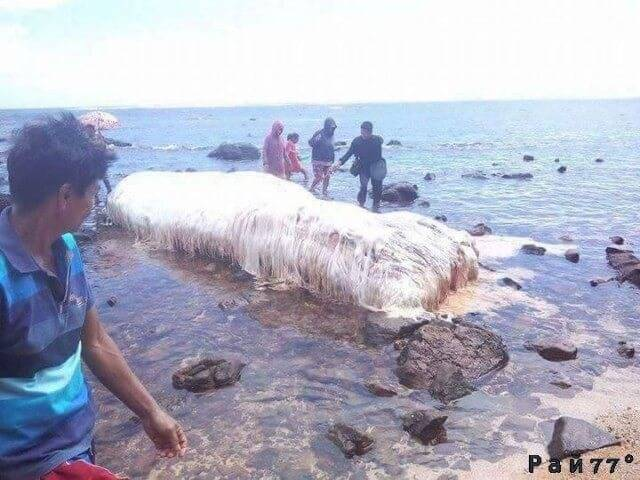 Волосатое, огромное существо вымыло на побережье, в Филиппинах.