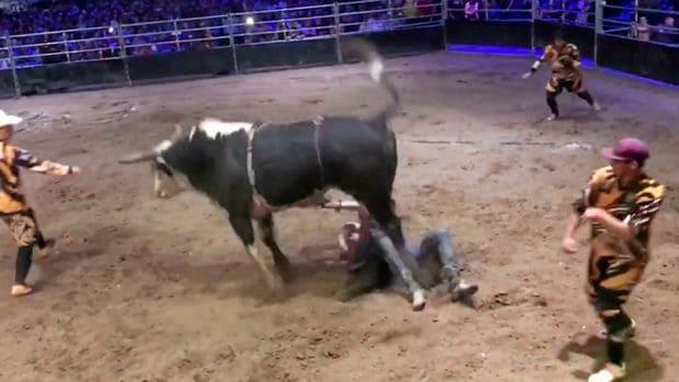 Бык лишил наследства ковбоя в Австралии. (Видео)