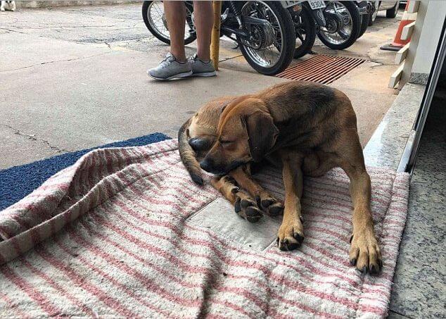 Собака четыре месяца дежурит возле больницы в Бразилии, дожидаясь своего хозяина