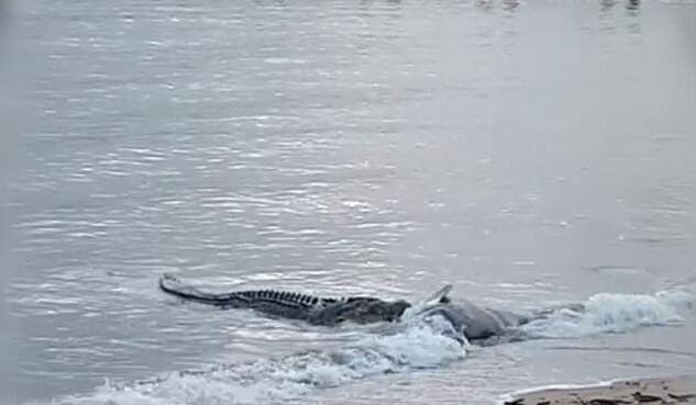 Крокодил на пляже 69