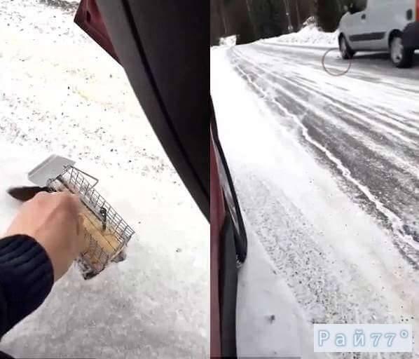 Мышь, выпущенная на свободу не успела перебежать дорогу в Норвегии. (Видео)