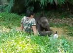 Осиротевший слонёнок вернулся к своему спасателю, после того, как стадо отвергло его ▶