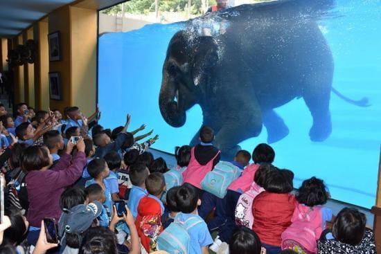 В тайском зоопарке слонов приучили к «дайвингу». (Видео)