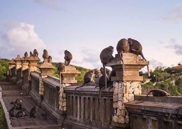 Обезьянья мафия затерроризировала туристов в Индонезии. (Видео)