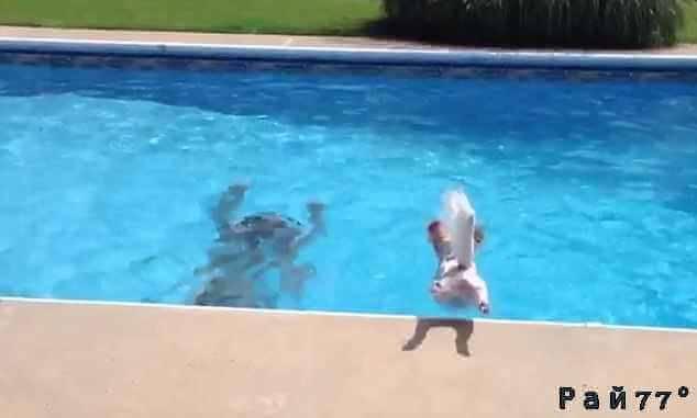 Отважный пёс бросился в бассейн, чтобы спасти своего хозяина в США.