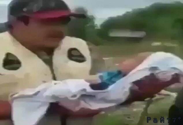 Странный ритуал в США. Новорождённого поместили в тушу коровы. (Видео)