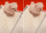 «Грозный» щенок предостерёг свою хозяйку, что с ним шутки плохи ▶