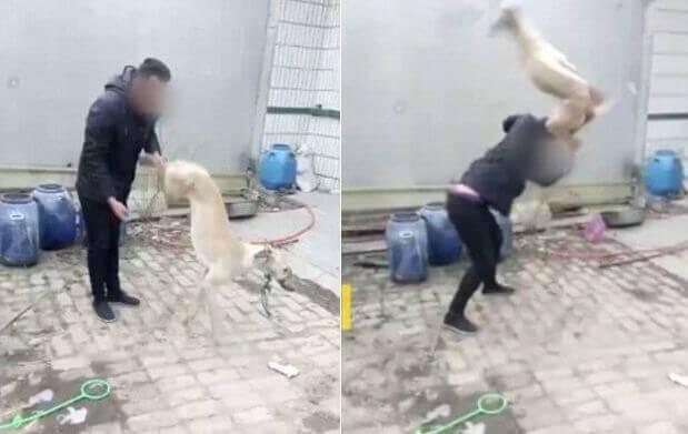убийство собаки на глазах у детей