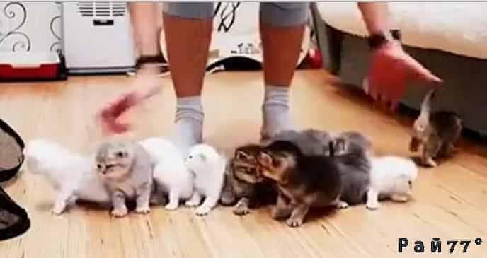 Совместная фото сессия десятерых котят закончилась полным провалом.