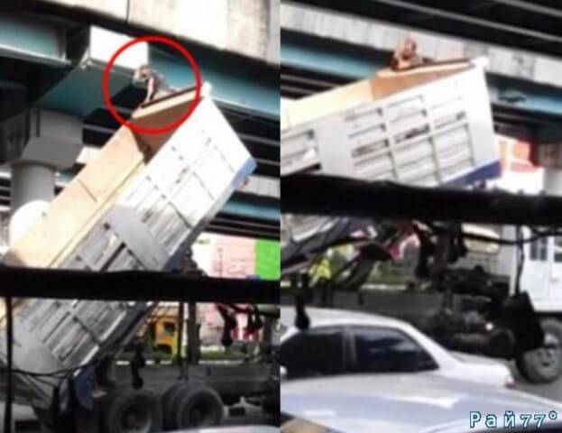Водитель самосвала при помощи гидравлического кузова спас котёнка, забравшегося на опору эстакады в Тайланде. (Видео)