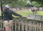 Носорог, словно домашний пёс, показал свои истинные чувства смотрительнице зоопарка