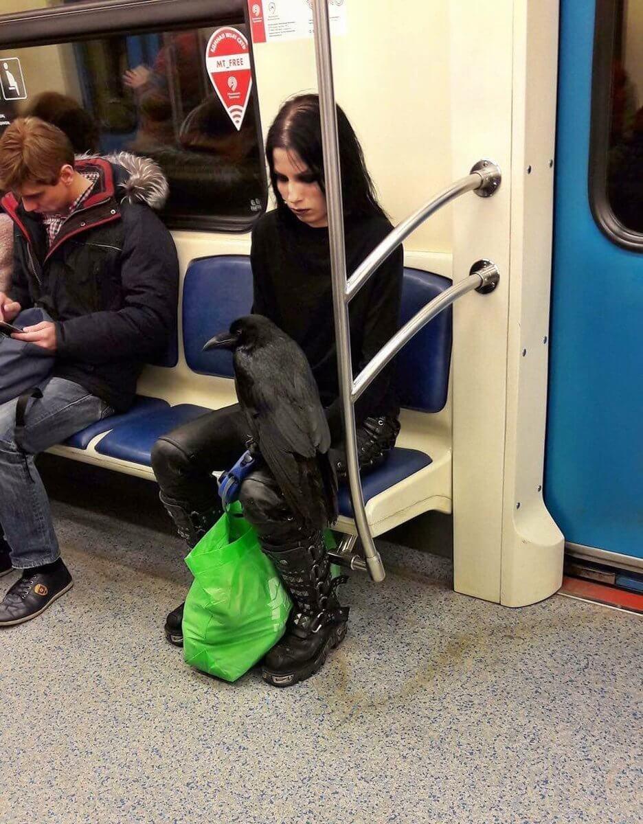 Девушка - гот с чёрным вороном на коленях была замечена в московской подземке.