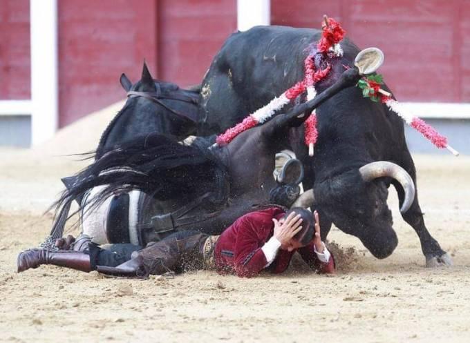 Бык отомстил за своего соплеменника женщине - матадору на корриде в Испании. (Видео)